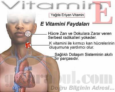 e-vitamini-faydalari-gelarabul1.jpg (400×320)