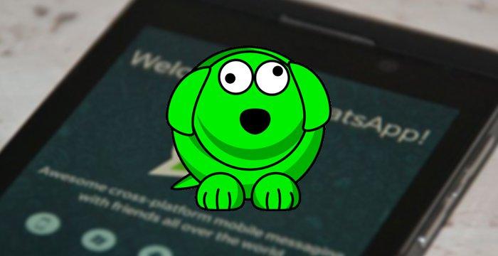 WhatsDog.jpg (700×360)
